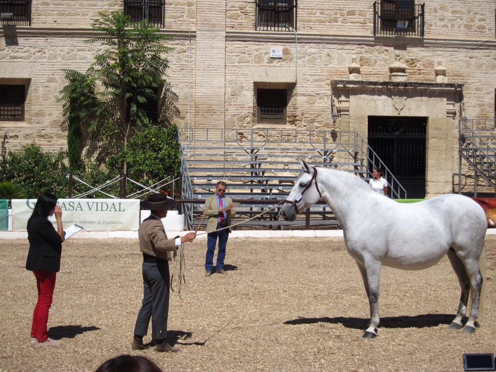 Judges making notes at the Cordoba Horse Fair