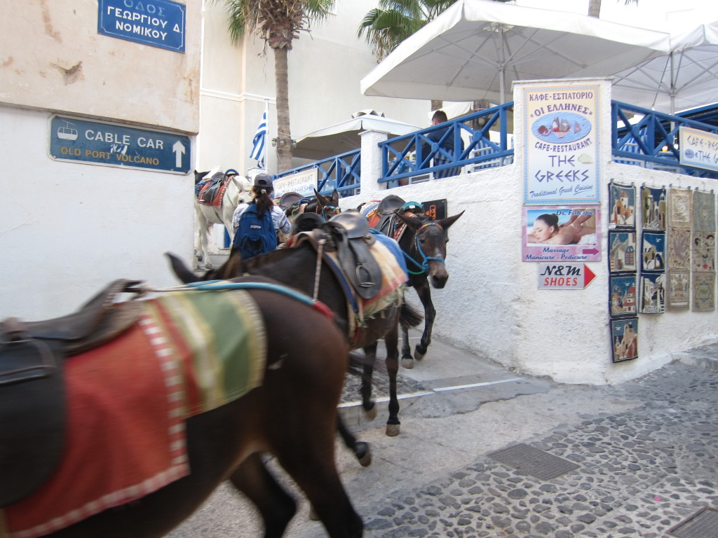 Burros get right of way in Fira